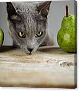 Cat And Pears Canvas Print