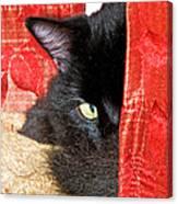 Cat Hiding Behind Drapes Canvas Print
