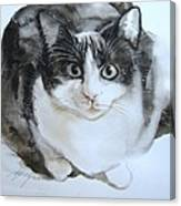 Cat In Black And White  Canvas Print