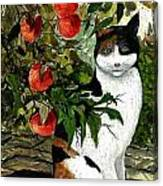 Cat On The Patio Canvas Print