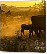 Cattle Drive 6 Canvas Print