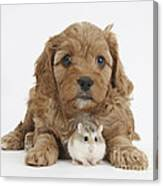 Cavapoo Puppy And Roborovski Hamster Canvas Print