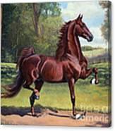 Ch. Merchant Prince Canvas Print