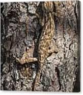 Chameleon Climbing Canvas Print