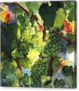 Chardonnay Au Soliel Canvas Print