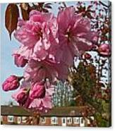 Cherry Blossom Spring Canvas Print