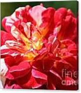 Cherry Petals Canvas Print