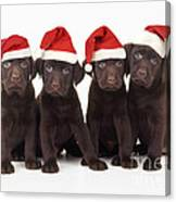 Chocolate Labrador Puppies Canvas Print