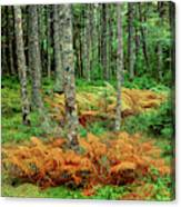 Cinnamon Ferns And Red Spruce Trees Canvas Print
