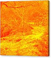 Clifton Woods Canvas Print