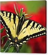 Close Up Of A Canadian Tiger Canvas Print