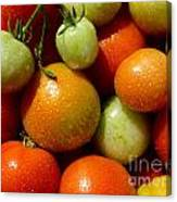 Closeup Of Ripening Fresh Tomatoes Canvas Print
