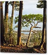 Coastal Rainforest Havelock Isl India Canvas Print