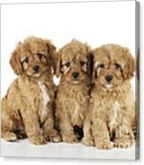 Cockapoo Puppy Dogs Canvas Print