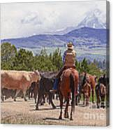 Colorado Cowboy Cattle Drive Canvas Print