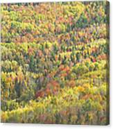 Colorful Autumn Forest In Mount Blue State Park Weld Maine Canvas Print