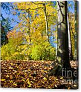 Colorful Fall Autumn Park Canvas Print