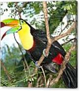 Colorful Toucan Canvas Print
