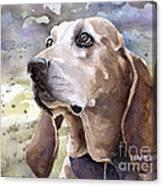 Coonhound - Pumpkin Canvas Print