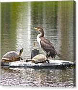 Cormorant And Turtle Duo Canvas Print