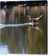 Cormorant Landing Canvas Print