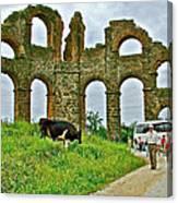 Cow By Second Century Aspendos Aqueduct-turkey Canvas Print