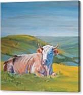 Cow Lying Down Canvas Print