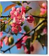Crab Apple Canvas Print