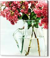Crepe Myrtle In A Vase Canvas Print