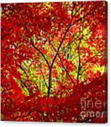 Crimson Window Canvas Print