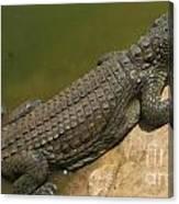 crocodile of the Nile Canvas Print