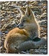 Curled Up Canvas Print