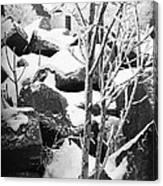 Cut Stone Blocks Backyard Snow Aberdeen South Dakota 1965 Black And White Canvas Print