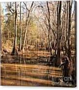 Cypress Waterway Canvas Print