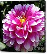 Dahlia Named Brian Ray Canvas Print