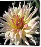 Dahlia Named Camano Ariel Canvas Print