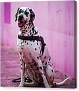 Dalmatian 6 Canvas Print