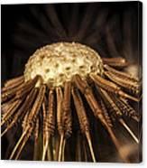 Dandelion Seeds Canvas Print