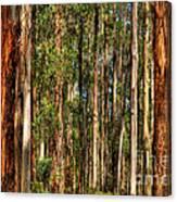 Dandenong Forest Canvas Print