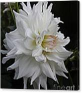 Darling Dahlia Canvas Print