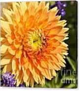 Dazzling Dahlia Canvas Print