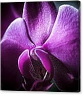 Deep Purple Orchid Canvas Print