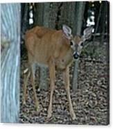 Deer 1 Canvas Print