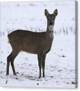 Deer In The Snow Netherlands Canvas Print