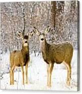 Deer In The Snowy Woods Canvas Print