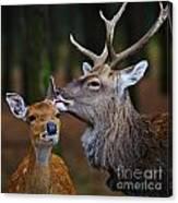 Deer Love Canvas Print