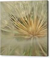 Desert Dandelion 6 Canvas Print