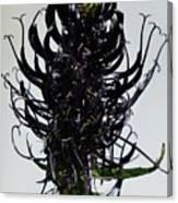 Devils Claw Flower Canvas Print