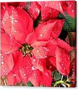 Diamond Encrusted Poinsettias Canvas Print