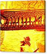 Diatom Canvas Print